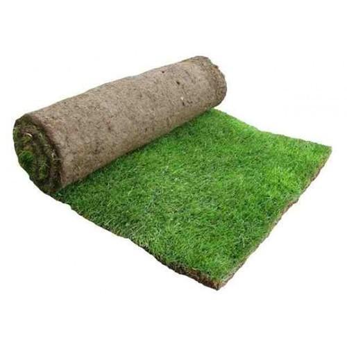 Premium Hard Wearing Lawn Turf 1m2 Roll (1.2 sq yards)