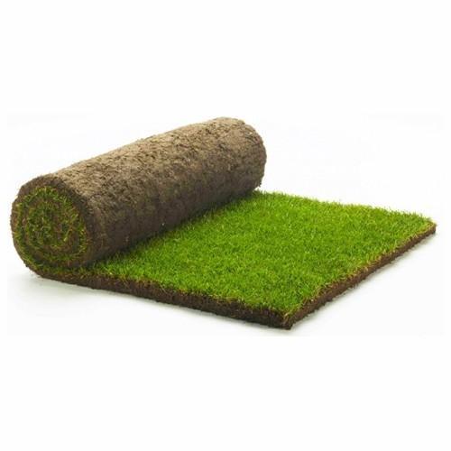 Rolawn Medallion Lawn Turf 1m2 Roll (1.2 square yards)
